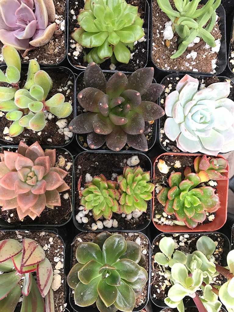 Top 5 Species of Succulent Plants that Can Be Grown at Home