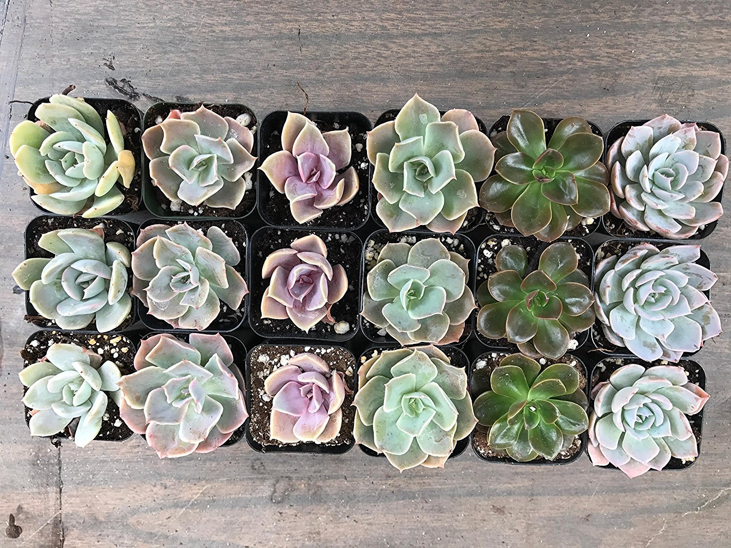 Stained Glass Succulent Wedding Favor Succulent Rosettes Glass  Flower 5