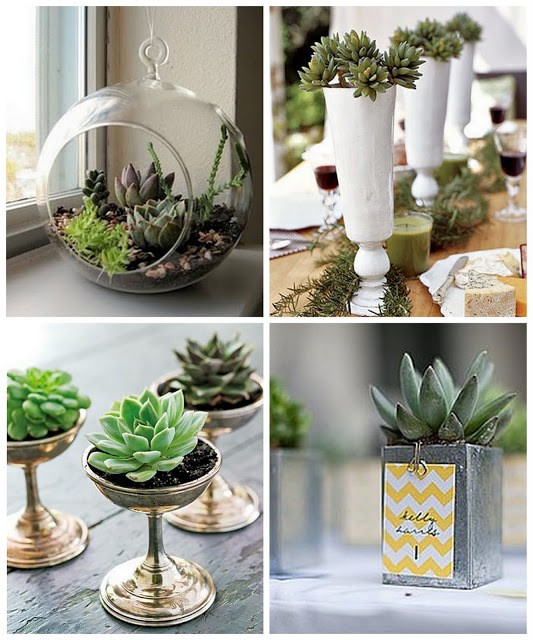 7 Ways You Can Use Succulent Plants As Décor In Your Homes