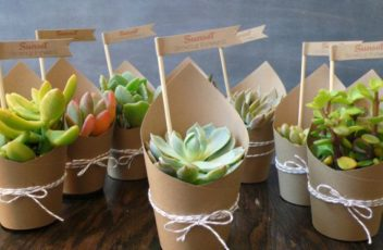 succulents as wedding party favors