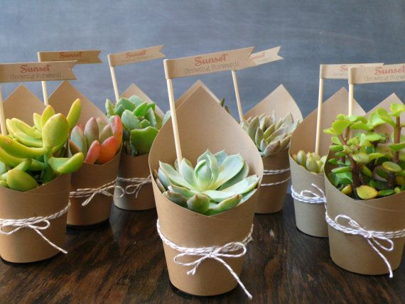Why Choose Succulents As Wedding Party Favors?