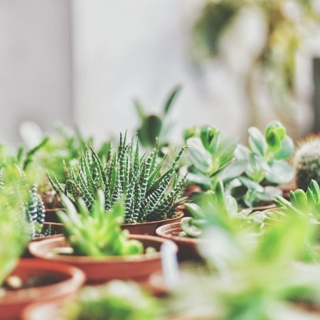 5 Health Benefits of Succulent Houseplants That You Will Surely Get