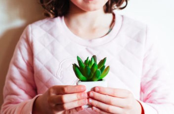 succulents for kids