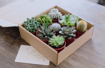 succulent plants as gifts for christmas season