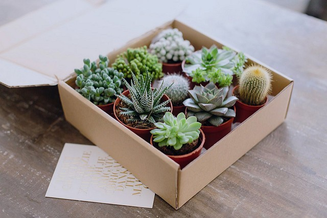 4 Reasons Why Succulent Plants Are Such A Joy To Give This Christmas Season