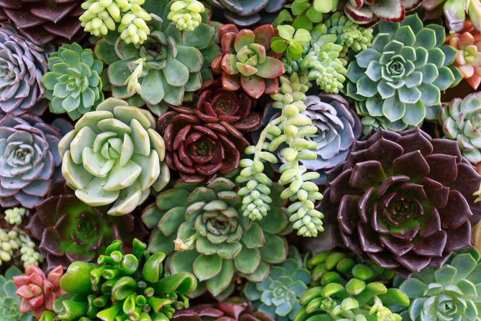9 Things You Probably Didn't Know About Succulent Plants