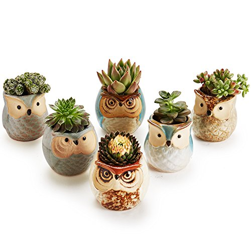 5 Tips For Planting Succulents In Small Containers