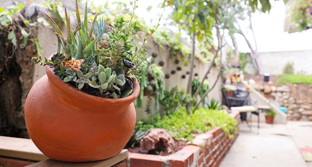 Top Four Reasons Why You Need Succulents At Home