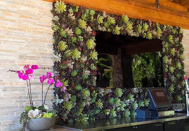 Understanding The Need For A Succulents Designer