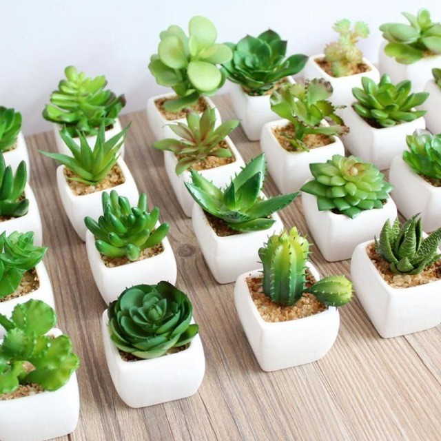 Top Four Creative Ways To Use Succulents in Parties