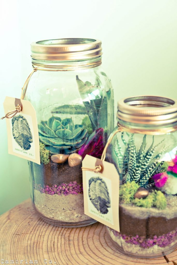 5 Creative Succulent Containers You Can Find In Your Homes