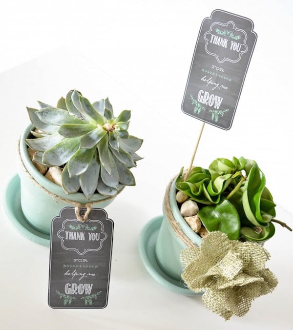 Succulent Plant: A Unique And Interesting Father's Day Gift
