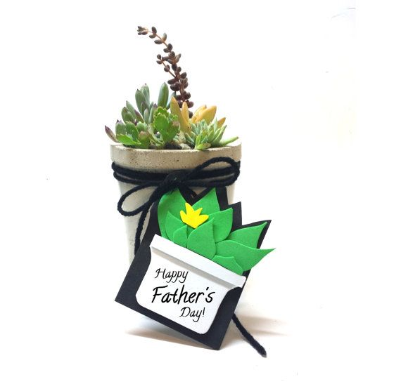 Giving Succulents As Presents For Father's Day