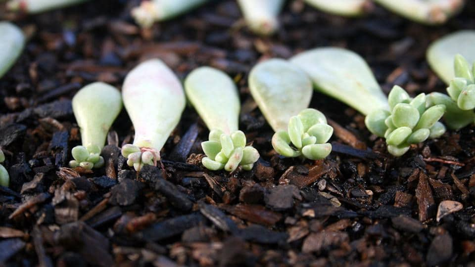 Successfully Growing Succulents From Seeds Using These Easy Methods