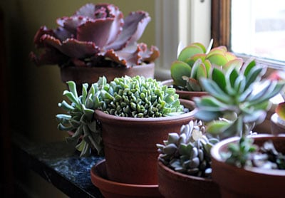 5 Tips On Caring For Succulents in Winter