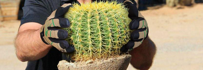 How To Handle Cactus Without Pricking Your Fingers