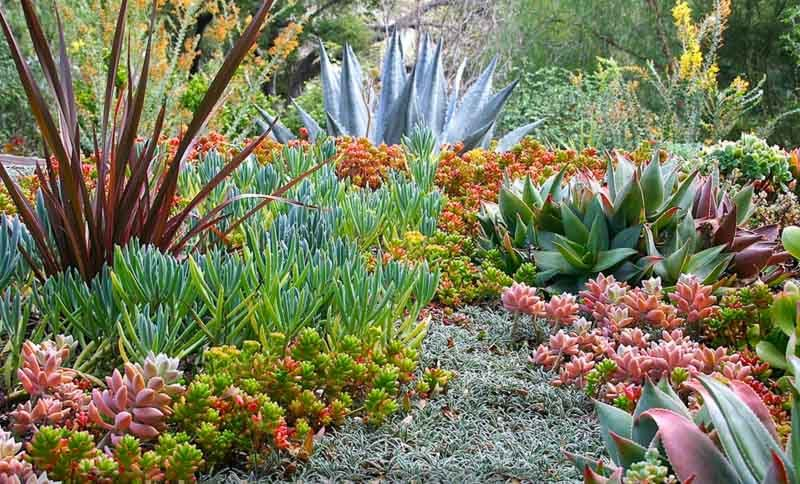 5 Easy Steps To Prepare Your Yard For A Succulent Garden