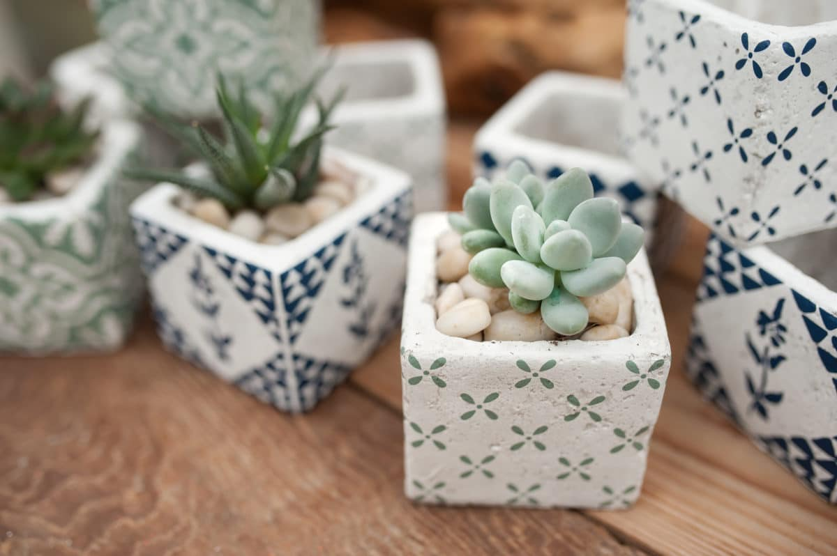 Giving gifts to succulent lovers doesnu0027t always need to be a small arrangement of succulent plants in their rooms. They probably have them already if they ... & Ideal Gift Ideas For Succulent Lovers u2013 CAL Farms Succulents