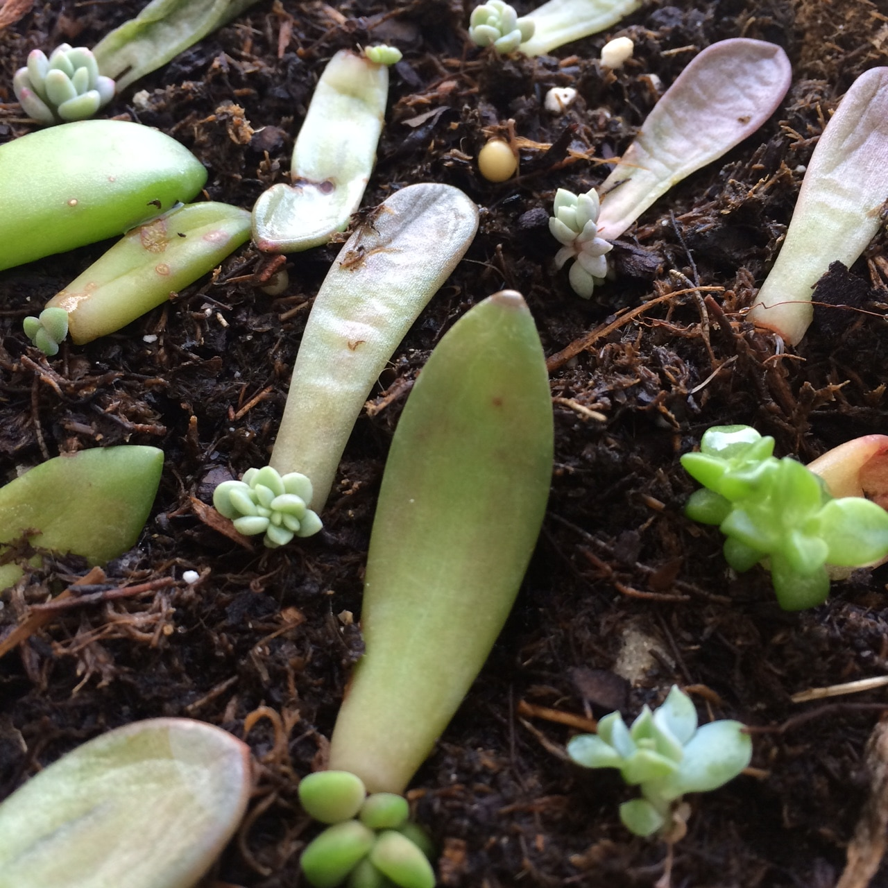 7 Tools For Propagating Succulents Correctly Cal Farms Succulents