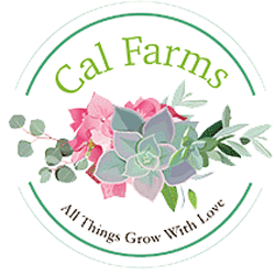 CAL Farms Succulents